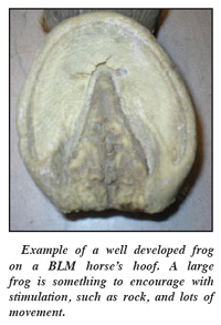 Well Developed Frog