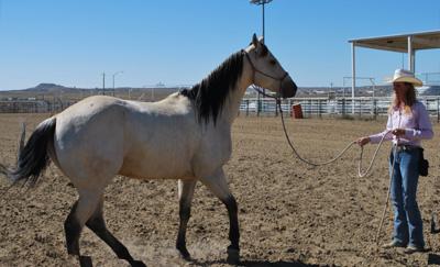 Groundwork establishes respect that transfers over under saddle.